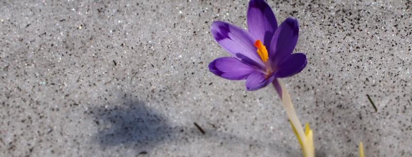 Spring - Multi Targi